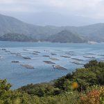 養殖筏が浮かぶ宇和海